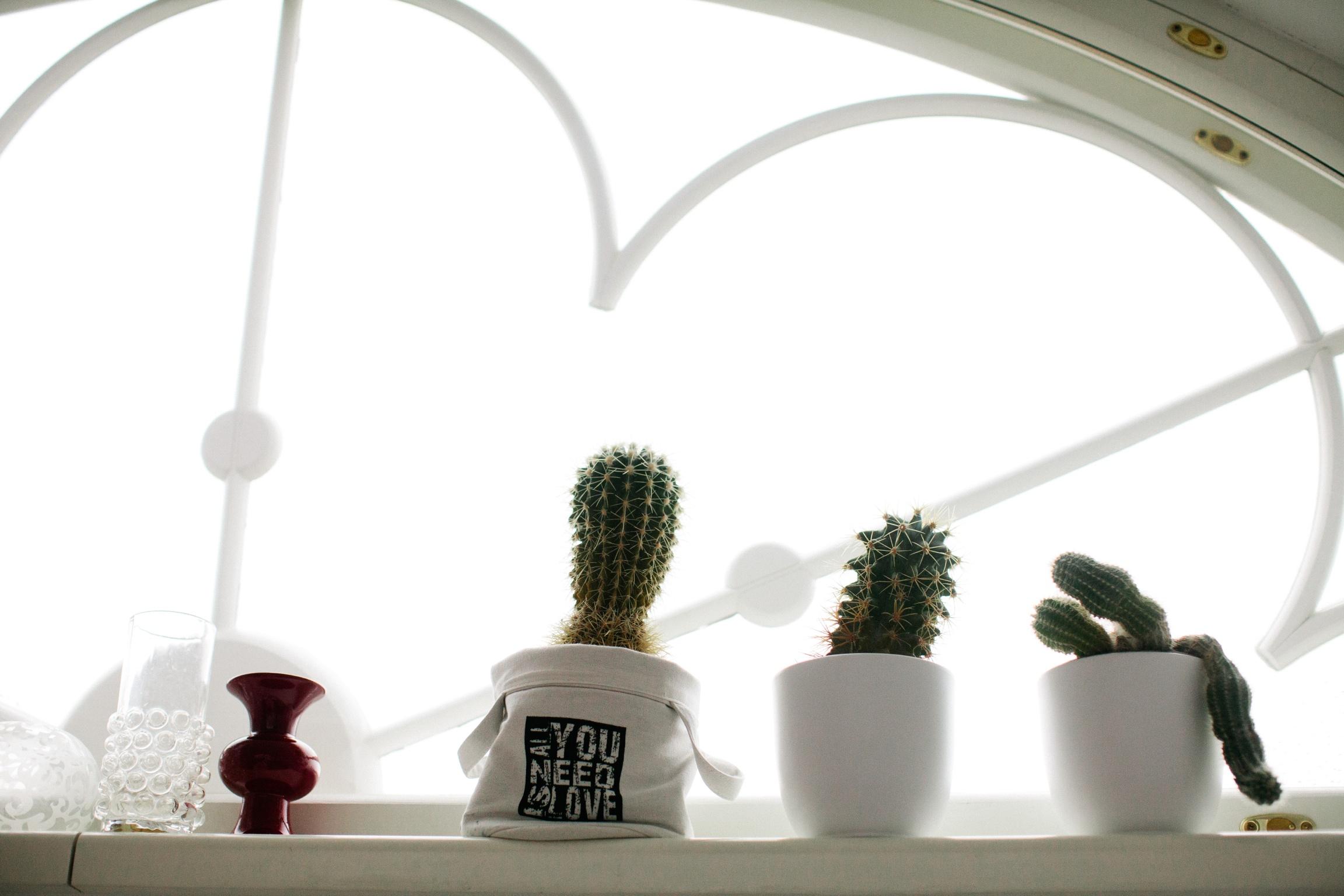kaktused aknal kodu